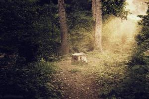 tronco d'albero alla foresta splendente spaventosa