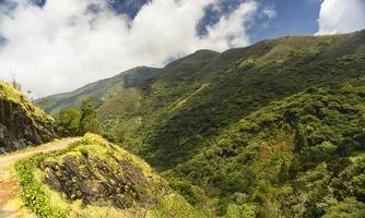 foresta di cavolfiori o broccoli a nilgiris foto