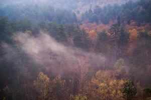 viste sulla foresta nebbiosa