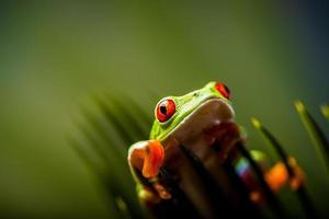tema tropicale della foresta pluviale con rana colorata