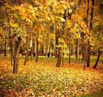 parco della foresta rosso vivo foto