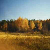 bosco autunnale e campo