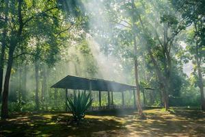 capanna nella foresta