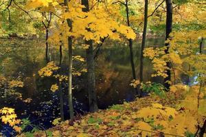 aceri in autunno vicino al lago della foresta