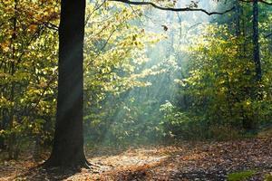 raggi di sole illuminati radura nella foresta di autunno foto