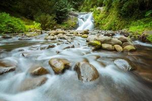 caduta dell'acqua nella foresta