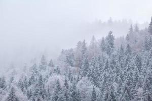 foresta invernale nella neve e nebbia