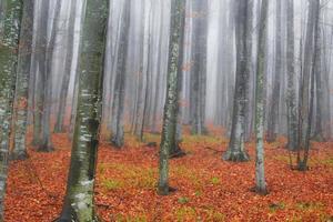 scenario autunnale nella foresta