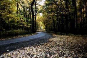 caduta su strada, alberi