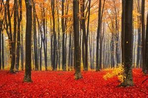 caduta colorata nella foresta
