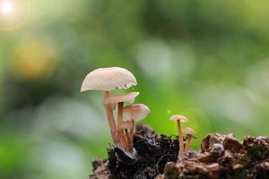 gruppo di funghi nella foresta