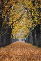 sentiero nel bosco autunnale / vicolo con jogger