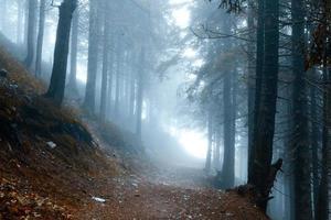 foresta dorata con nebbia e luce calda