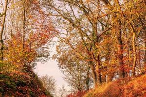 foglie di autunno in uno scenario di foresta