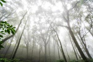 foresta di alberi nella stagione autunnale della thailandia