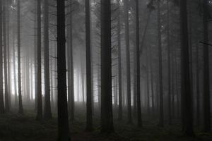foresta nebbiosa mattina foto