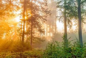 nella foresta foto