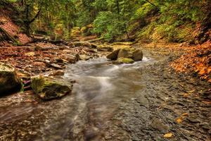 ruscello della foresta in autunno