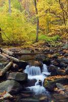 torrente d'autunno nella foresta
