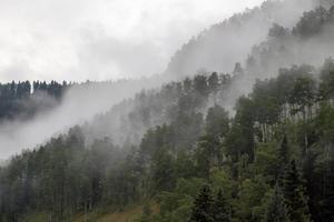 nebbia su una collina coperta di foresta foto