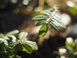 mirtilli rossi nella foresta foto
