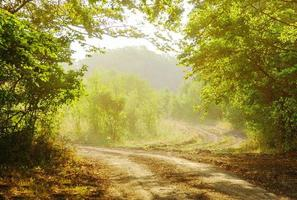 strada forestale in estate. strada panoramica. foto