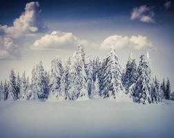 bellissimo paesaggio invernale nella foresta di montagna.