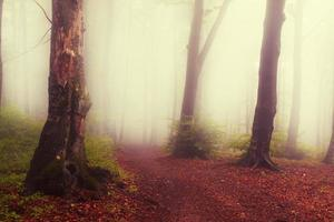 foresta nebbiosa rossa con una sensazione inquietante foto