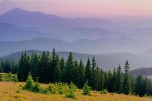 foresta di pini foto