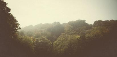 scena della natura della foresta foto