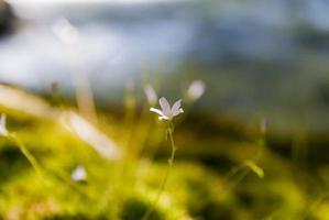 fiori di campo viola foto