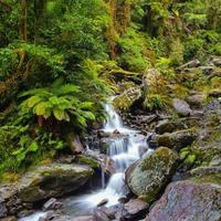 cascata nella foresta pluviale della Nuova Zelanda