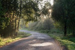 strada forestale nebbiosa dopo la pioggia in estate foto