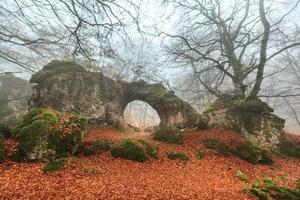 rocas en la niebla