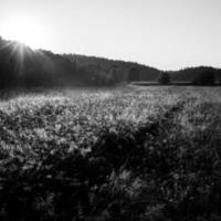 campi e prati nebbiosi dopo la pioggia d'estate foto