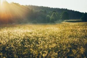 campi e prati nebbiosi dopo la pioggia d'estate. retrò foto