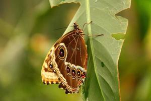 farfalla su una foglia foto