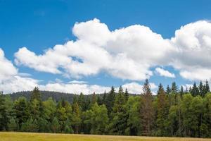 vista panoramica sulla foresta nera con nuvole e pini foto
