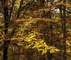 bella vibrante paesaggio autunnale foresta campagna in mattinata foto