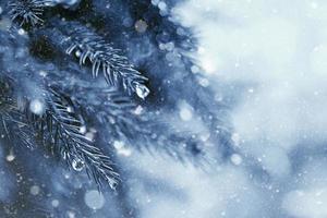 inizio inverno nella foresta, sfondi naturali astratti