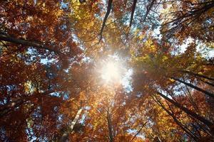 sfondo della natura foresta di autunno colorato, il sole che splende