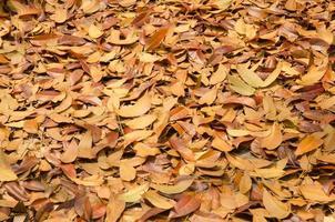 sfondo di stagione autunnale foglia rossa e gialla che cade
