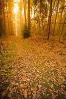sentiero attraverso la nebbiosa foresta d'autunno