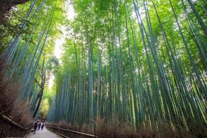 la foresta di bambù di Kyoto, Giappone