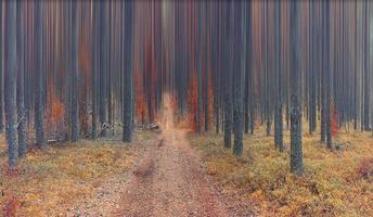 paesaggio autunnale nella foresta di abeti rossi