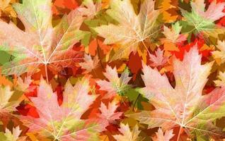 concetto di foglia d'autunno