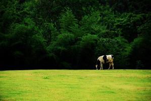 sfondo della natura foto