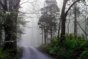strada nebbiosa foto