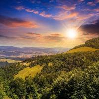 foresta di conifere su un pendio di montagna al tramonto foto