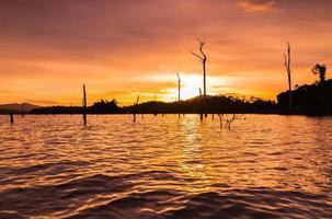 lago kenyir con un sacco di ceppo foto